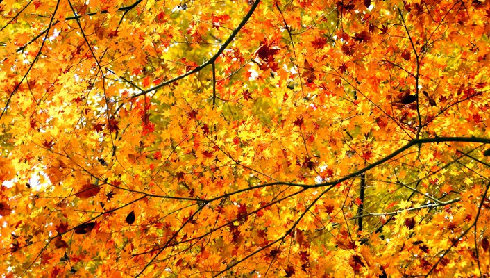Nature leaves autuum wallpaper