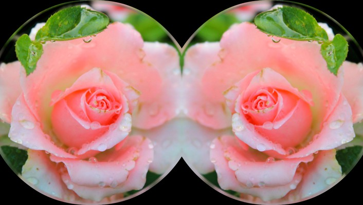 Pink roses collage wallpaper
