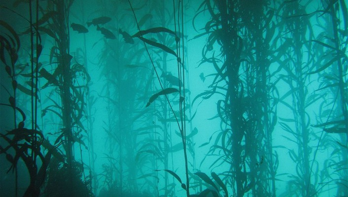 Ocean nature fish plants lakes algae underwater wallpaper