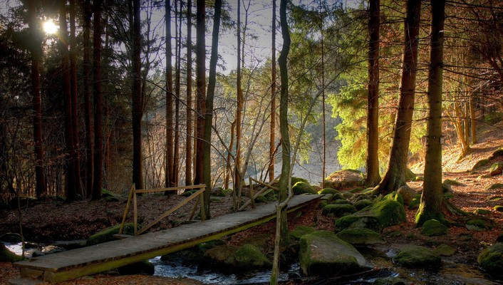 Wooden bridge over forest stream wallpaper