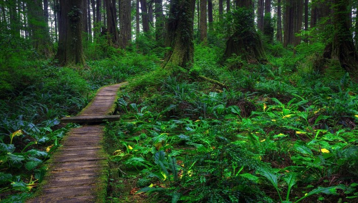 Beautiful forest path wallpaper