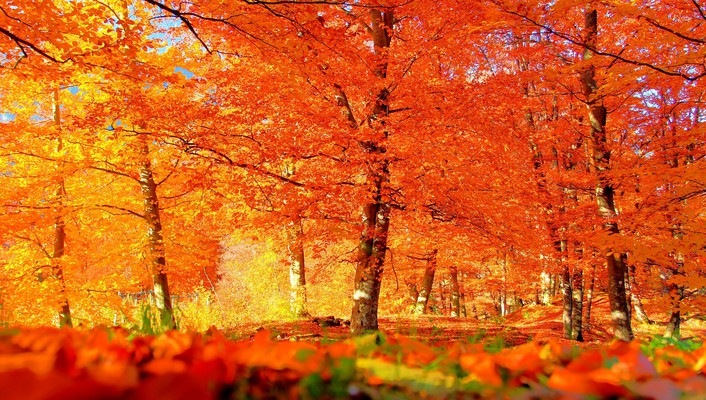 Autumn has arrived are you pleased wallpaper