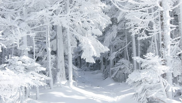 Forests snow landscapes trees wallpaper