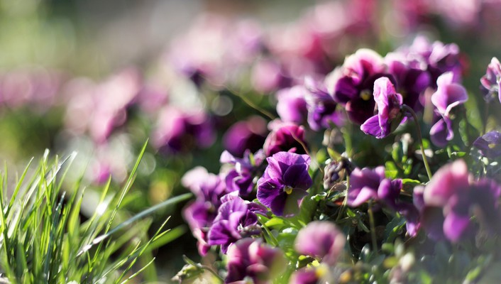 Flowers grass bokeh purple wallpaper