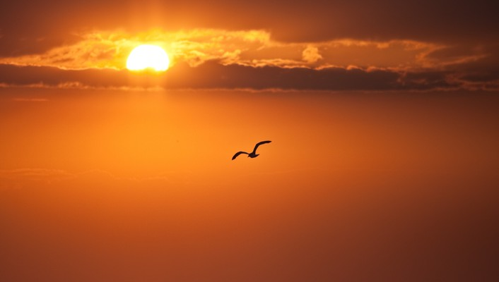 Birds clouds nature silhouettes skyscapes wallpaper