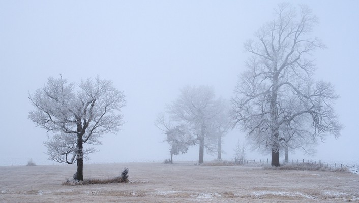 Winter trees cold fog frost gray hair hoarfrost wallpaper