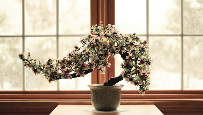 Flowers bonsai culture wallpaper