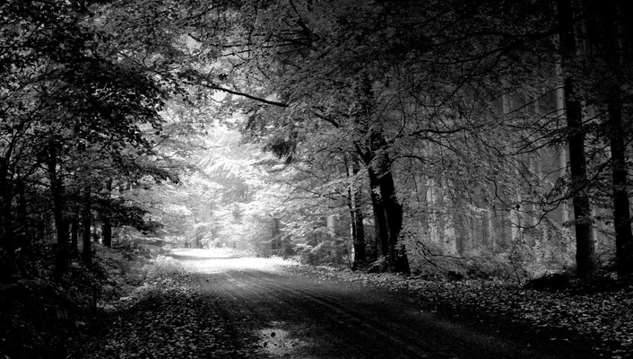 Forests grayscale roads trees wallpaper