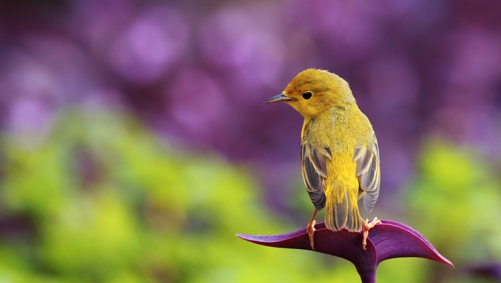 Little bird on flower wallpaper