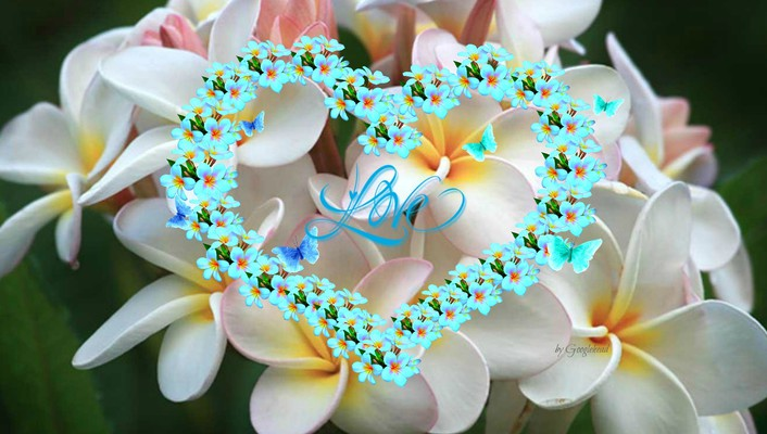 Plumeria heart butterflies for adelina wallpaper