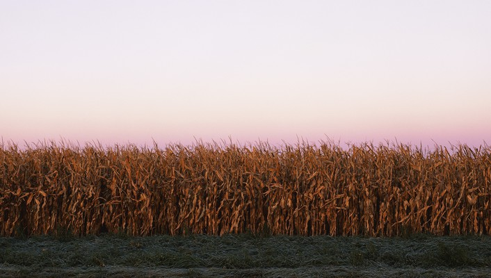 Corn landscapes multiscreen panorama wallpaper