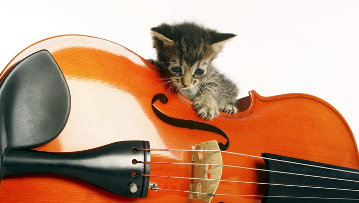 Music animals instruments kittens wallpaper