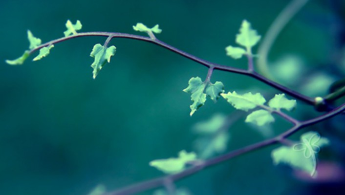 Nature leaves branches wallpaper
