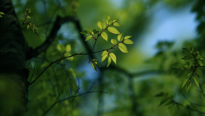 Depth of field leaves nature trees wallpaper