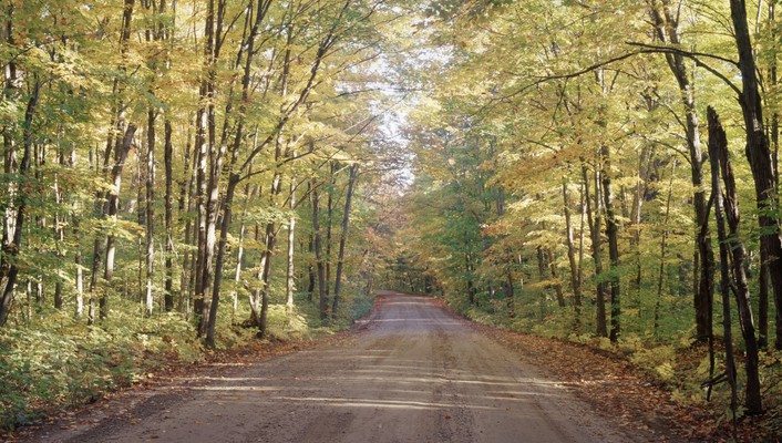Pretty forest road wallpaper