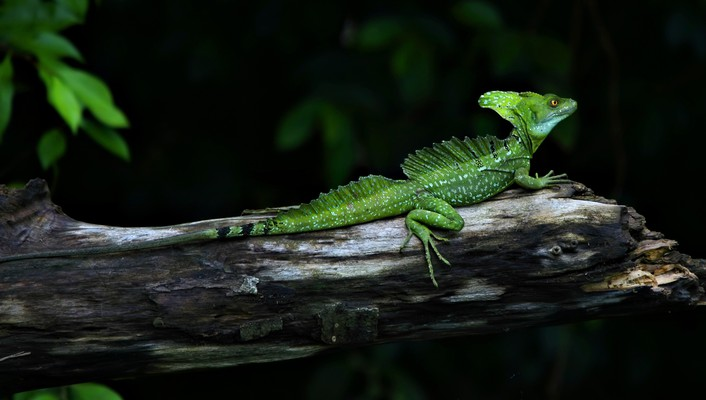 Animals branches green lizards nature wallpaper