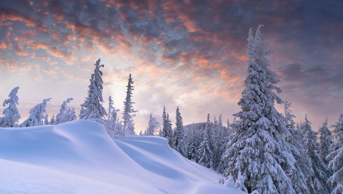 Winter forest hills skies wallpaper