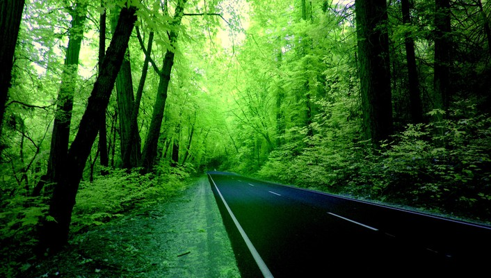 Green forest road wallpaper