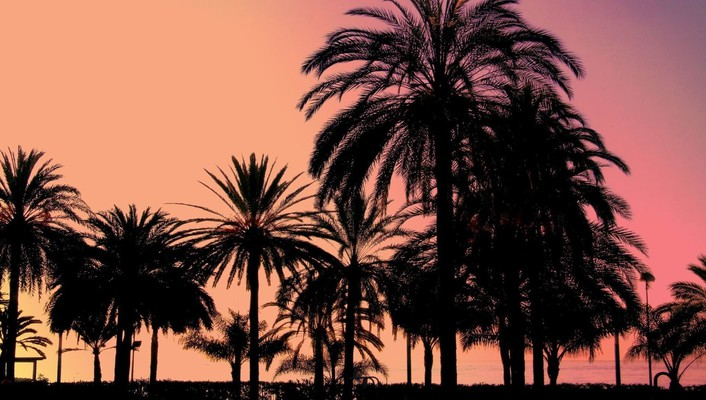 Landscapes palm trees silhouettes sunset wallpaper