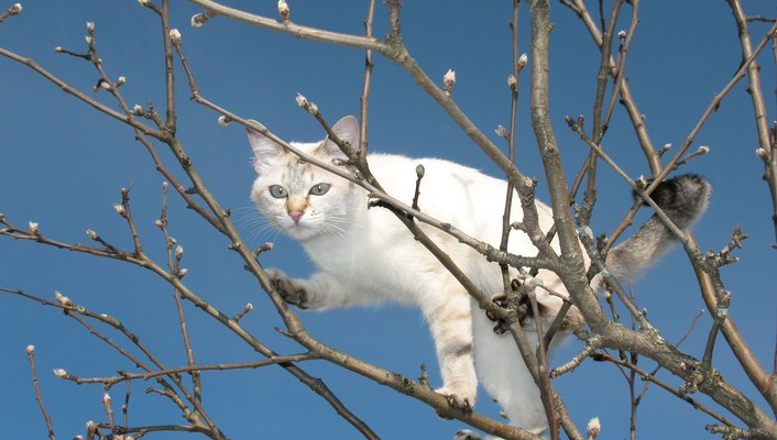 White cat in a tree wallpaper
