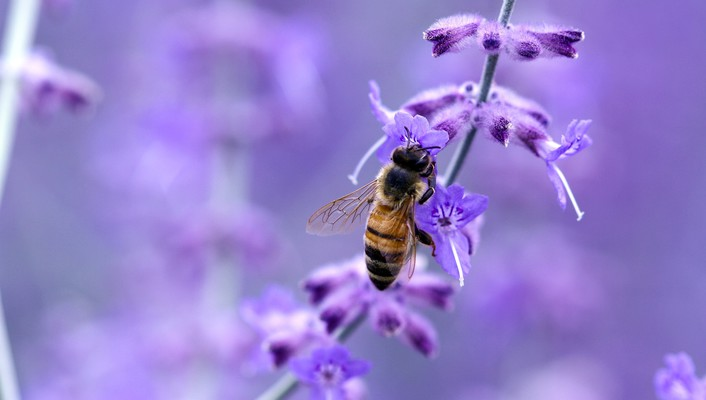 Close-up nature flowers insects purple macro bees wallpaper