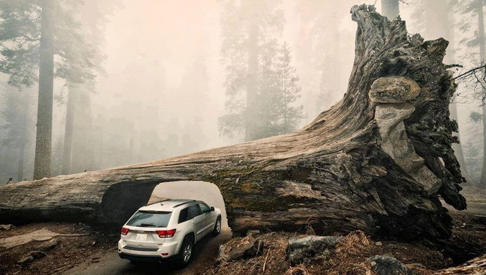 Jeep cars nature trees vehicles wallpaper