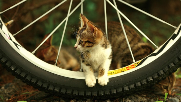 Animals bicycles cats motorbikes pets wallpaper