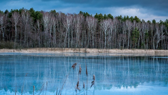 Forest around a blue lake wallpaper
