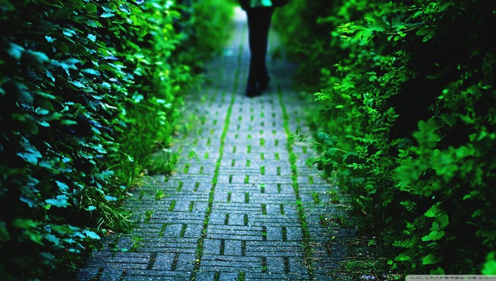 Nature path alley wallpaper