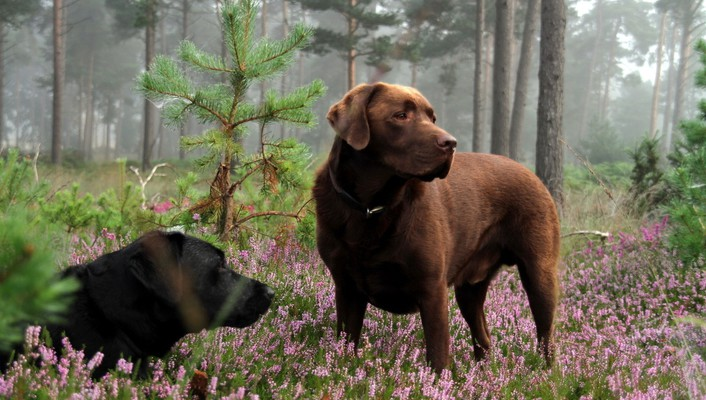 Forest animals dogs wallpaper