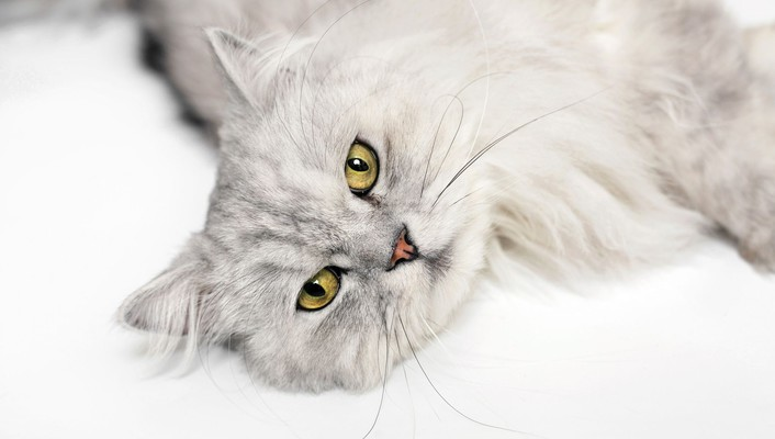 Cats yellow eyes wallpaper