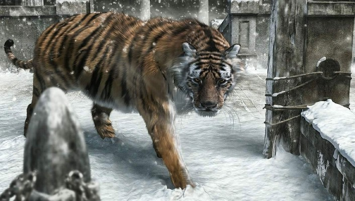 New year animals snow tigers wallpaper
