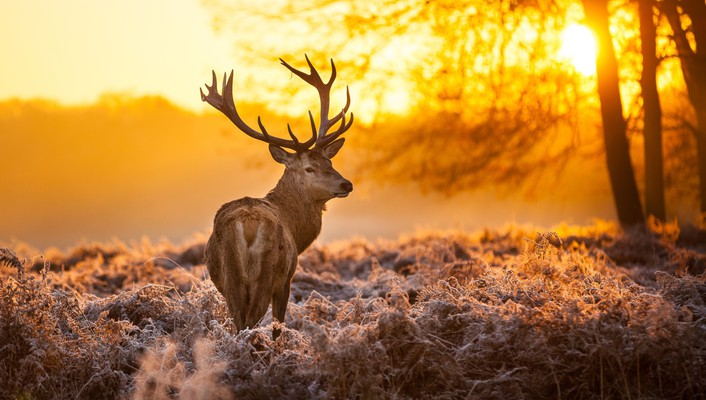 Ice animals deer fauna wallpaper