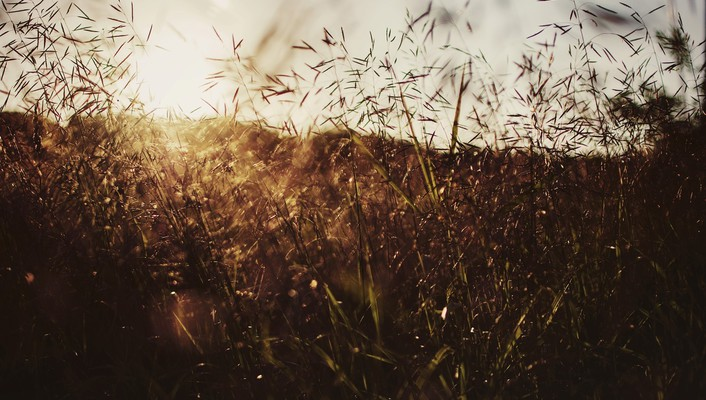 Bokeh fields grass summer sunset wallpaper