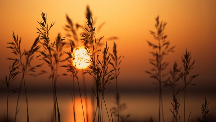 Sunset and dry herbs wallpaper