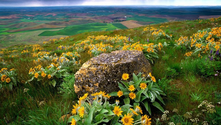 Flowers fields rocks country washington farm yellow wallpaper