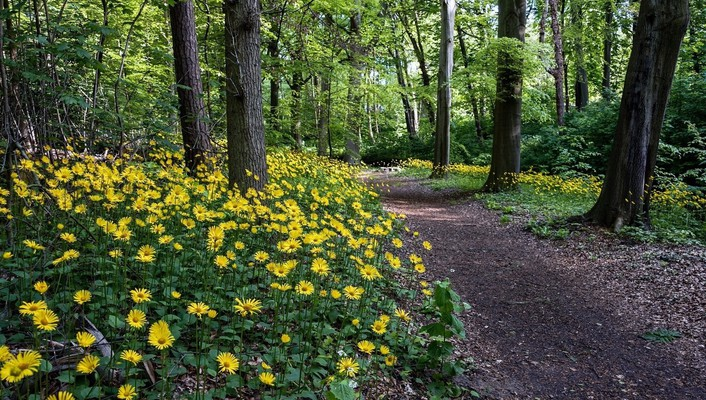 Landscapes nature trees flowers yellow wood path track wallpaper