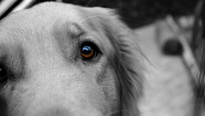Animals brown eyes cameras closeup dogs wallpaper