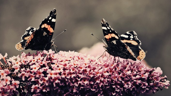 Flowers animals insects butterflies wallpaper