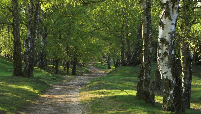 Forests nature parks trees wallpaper