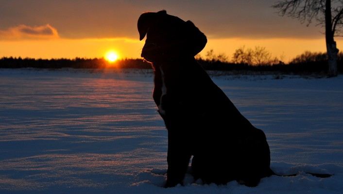 Animals dogs sunset winter wallpaper