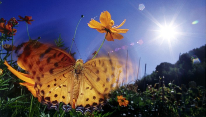 Sun butterflies insects nature wallpaper