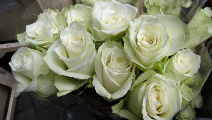 White roses for sale wallpaper