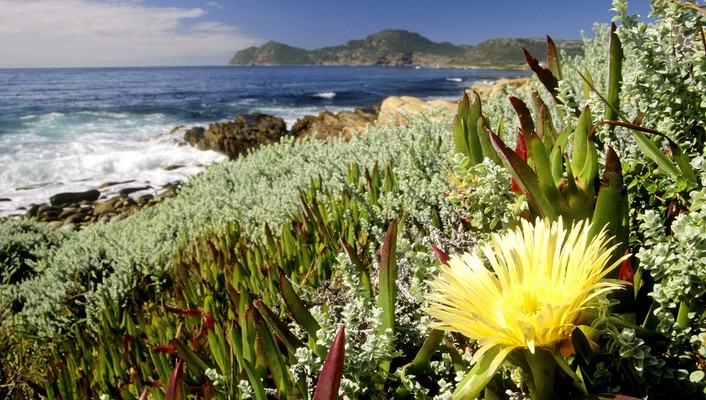 Cape town national park south africa landscapes wallpaper