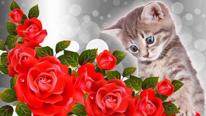 Kitty red roses wallpaper