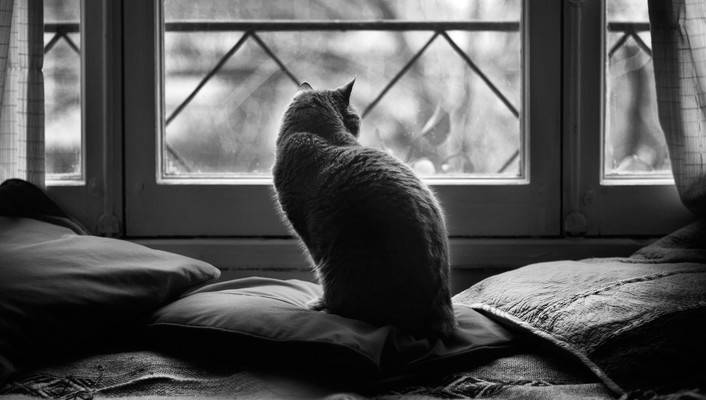 Cats animals grayscale window panes wallpaper