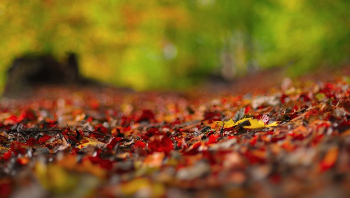 Forest leaves ground blurred wallpaper