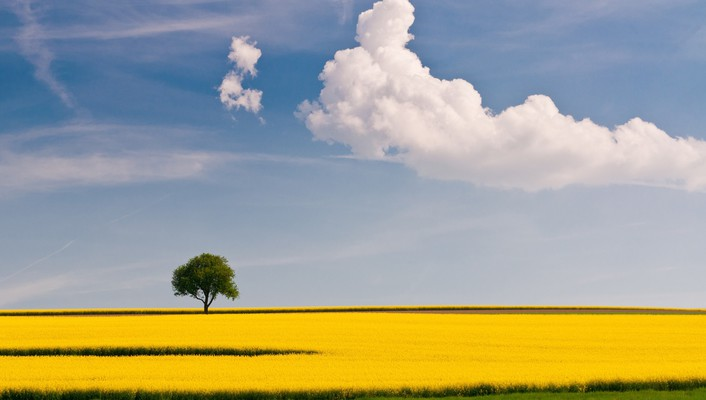 Clouds fields landscapes summer trees wallpaper