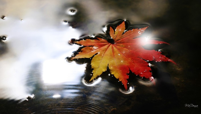 Sparkling fall leaf wallpaper