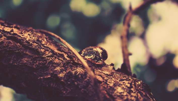 Drop vision branches focused wallpaper